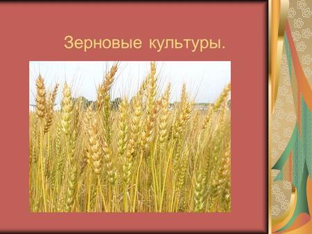 Зерновые культуры в россии реферат 8298