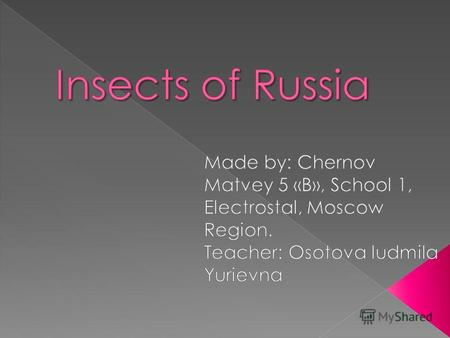 Insects is a class of invertebrates arthropods. Insects of Russia: ants, ladybirds, bees, flies, grasshoppers, beetles, dragonflies, butterflies, wasps,