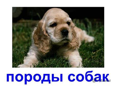 скачать презентацию породы собак для детей
