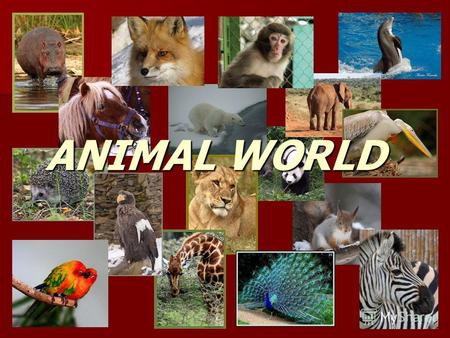 ANIMAL WORLD. live(s) in Africa a monkey an elephant budgies a giraffea zebra.