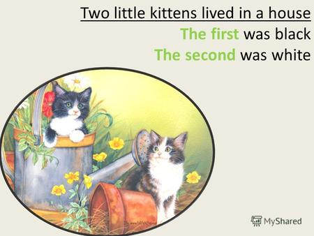 Two little kittens lived in a house The first was black The second was white.