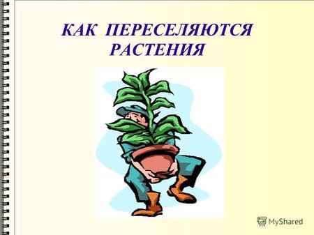 Распространение на тему семян презентацию