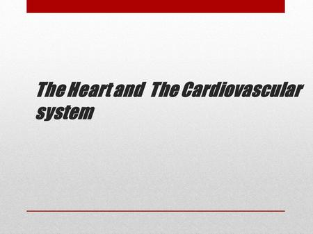 The Heart and The Cardiovascular system. The heart lies in the chest immediately behind the breastbone.