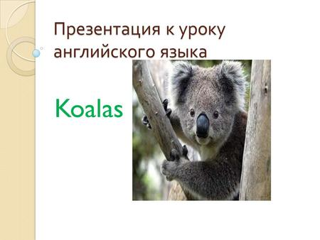 Презентация к уроку английского языка Koalas. Though often called the koala «bear», this animal is not a bear at all; it is a marsupial.