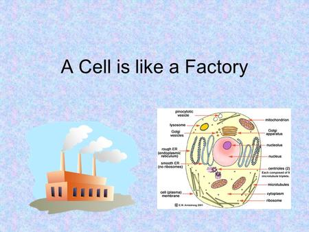 A Cell is like a Factory. How can a cell be like a factory??? In a factory, you have many different tasks being completed in the same building. –Ex. The.