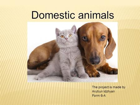 The project is made by Arutiun Idzhyan Form 6-A. I love all kinds of domestic animals: cats, dogs, hamsters. I have one cat and one dog. The cats name.