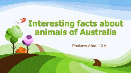 Pankova Alina, 10 A. Australia - the largest island of Oceania, was named the fifth continent. Its fauna is unique, but completely devoid of monkeys,