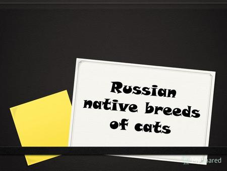 Russian native breeds of cats. Cats first appeared with the spread of Eastern Slavic tribes. It was in the VI-IX centuries.