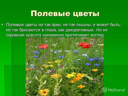 Презентация На Тему Цветы С Музыкой
