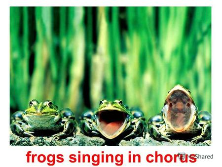 frogs singing in chorus mouse in the cheese camel quenches his thirst.