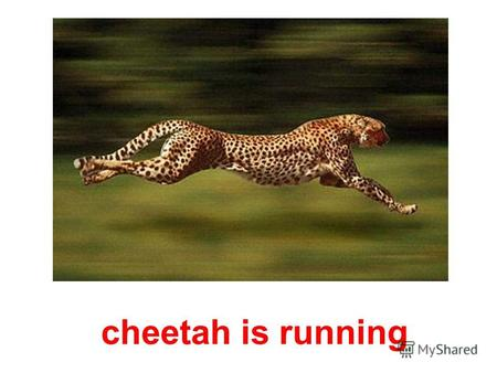 cheetah is running egret is flying in the sky hedgehog is drinking milk.
