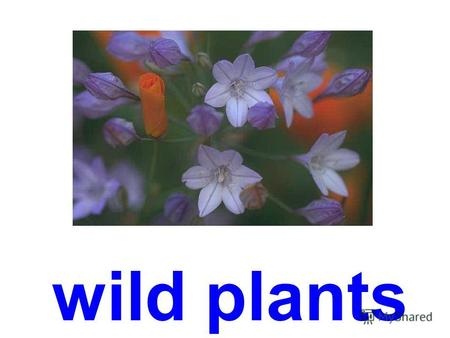 wild plants cornflower camomile bluebell forget-me-not.
