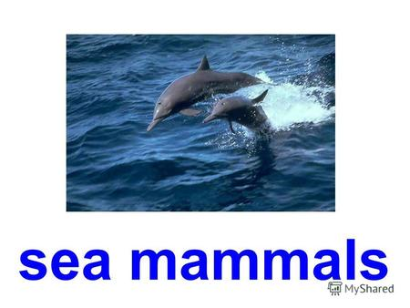 sea mammals white whale dolphin grampuses humpback whale.