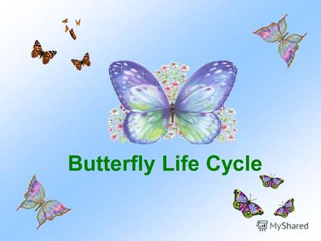 Butterfly Life Cycle. This butterfly is laying eggs on parsley.