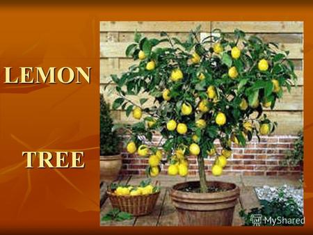LEMON TREE Complete the lines using the verbs from the box in the correct tense SITFEEL DRIVE HANG AROUND WASTE WAIT I __ __________ here in the boring.