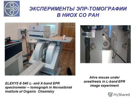 ЭКСПЕРИМЕНТЫ ЭПР-ТОМОГРАФИИ В НИОХ СО РАН ELEXYS E-540 L- and X-band EPR spectrometer – tomograph in Novosibirsk Institute of Organic Chemistry Alive mouse.