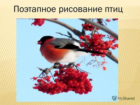 Презентация поэтапное рисование птиц 2 класс