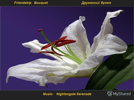 Music: Nightengale Serenade Friendship Bouquet Дружеский букет.