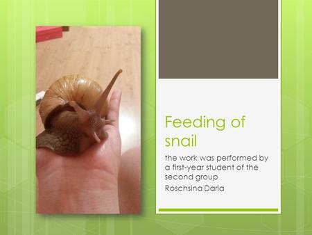 Feeding of snail the work was performed by a first-year student of the second group Roschsina Daria.